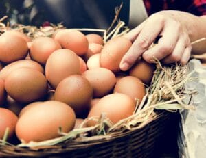 cleaning-eggs-with-vinegar