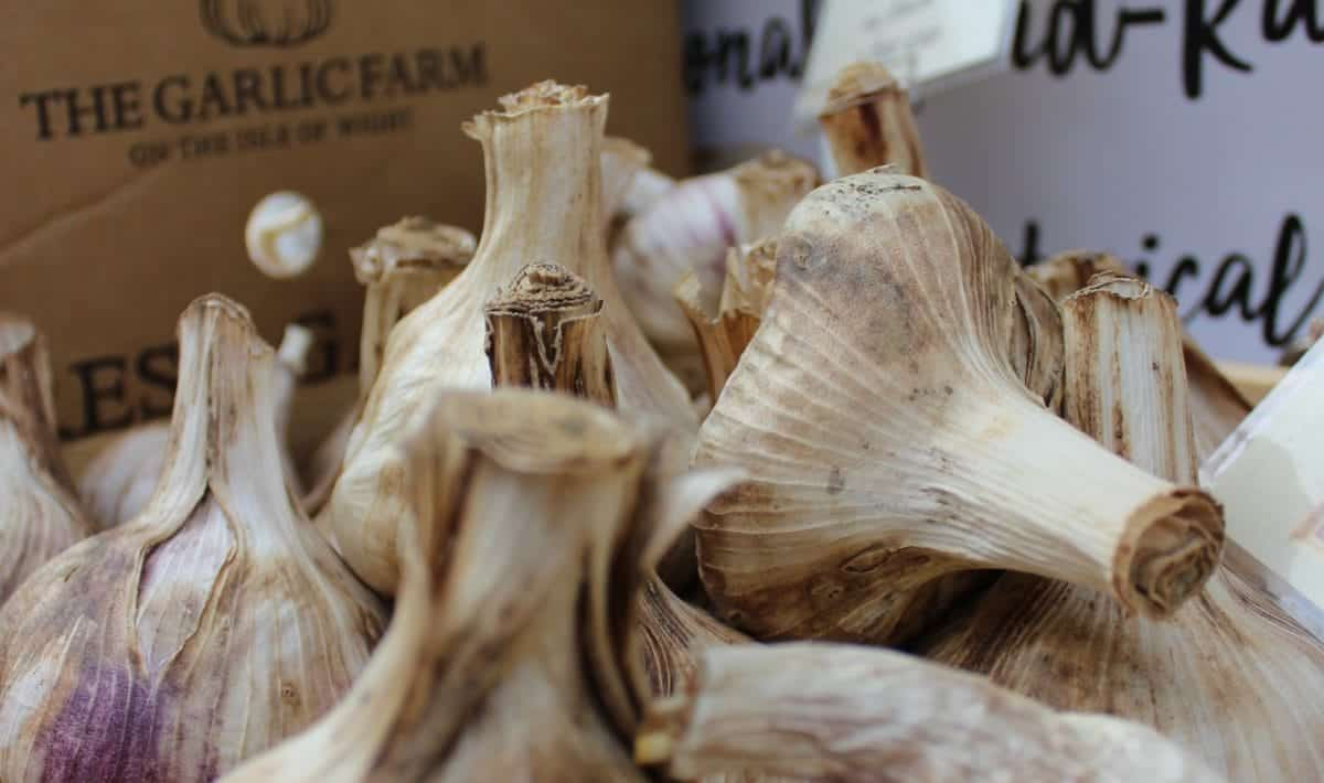 garlic bulbs for garlic press