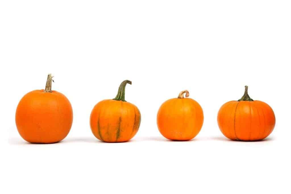 a variety of pumpkins