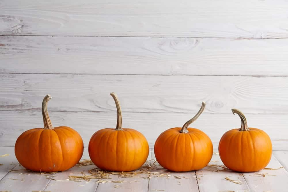 best-pumpkins-for-seeds