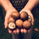 mushroom-farm