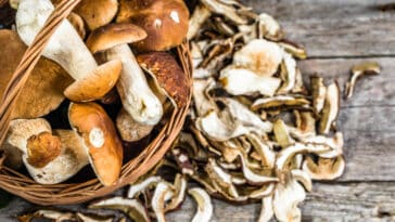 how-to-reconstitute-dried-mushrooms