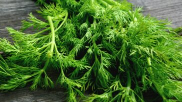 What to do with Dill