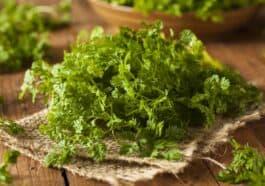 Aromatic Herb Chervil